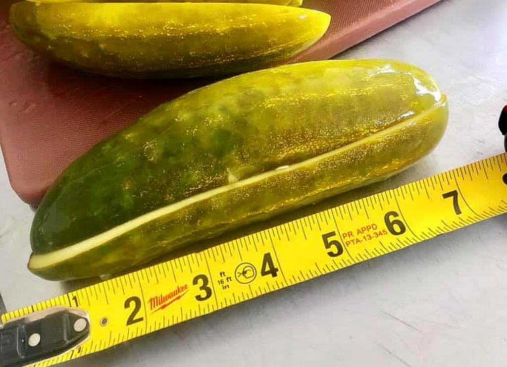 size of Elsie's sandwich pickles