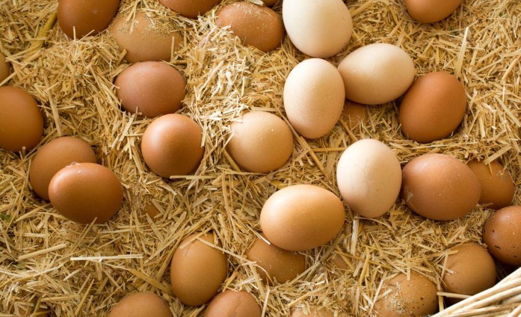 Farm-fresh eggs laying on some hay