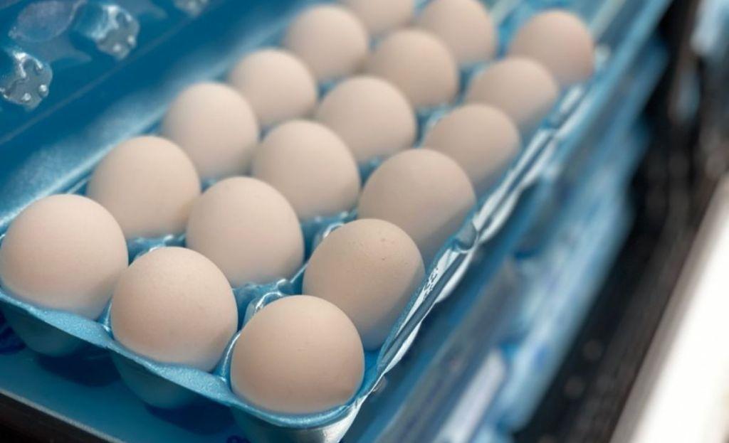 Regular white eggs in a carton