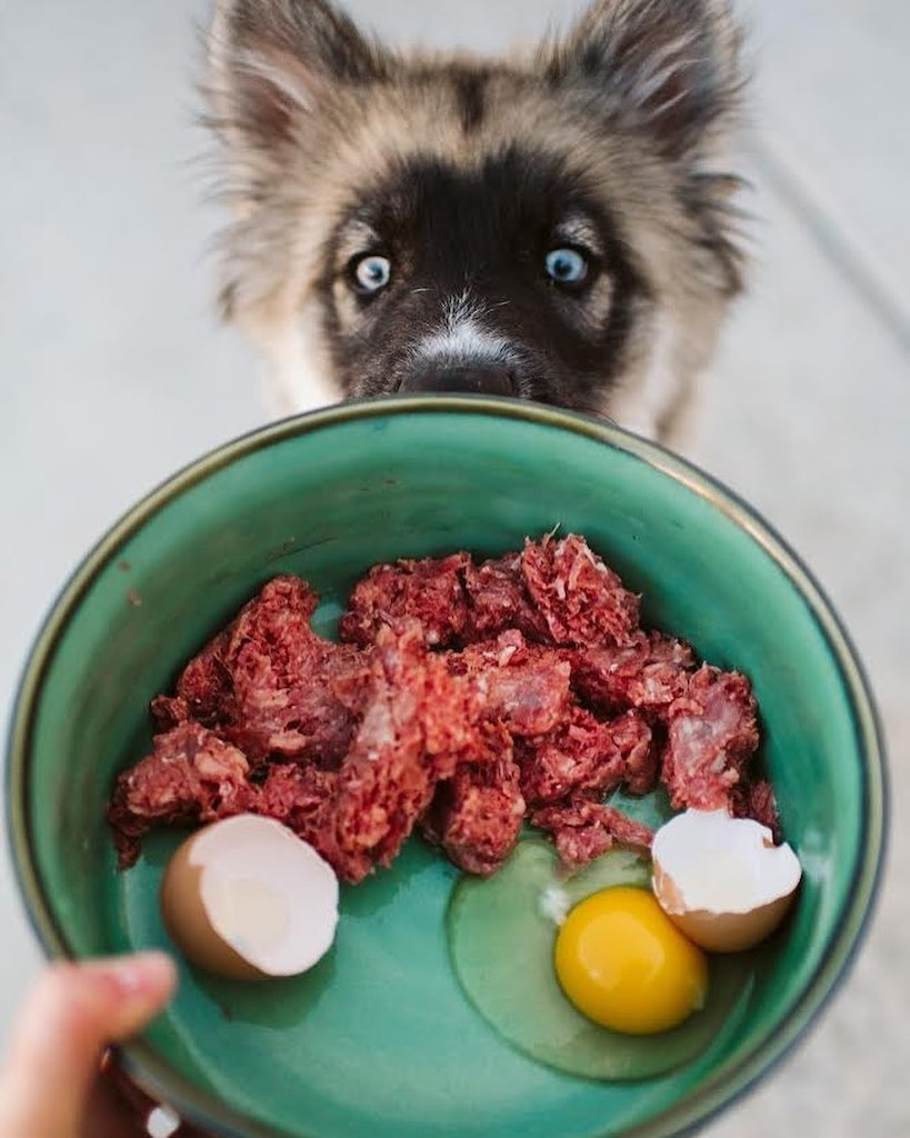 dog looking at bowl with raw meat and eggs